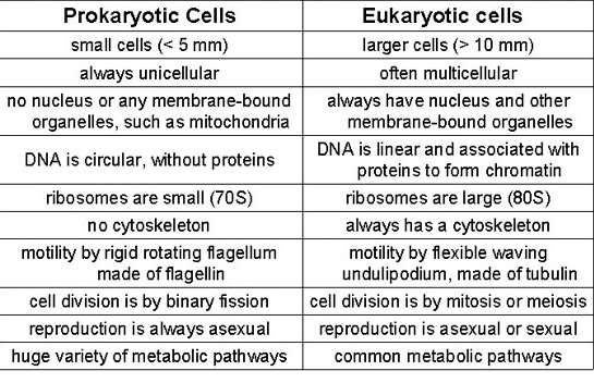 YR9 Topic 2 Cells AMAZING WORLD OF SCIENCE WITH MR GREEN – Prokaryotic and Eukaryotic Cells Worksheet