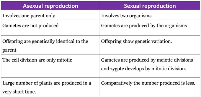 Self pollination vs asexual reproduction worksheets