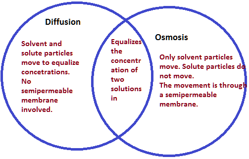 YR9 Topic 3 Cellular Movement AMAZING WORLD OF SCIENCE WITH MR – Diffusion Osmosis Worksheet
