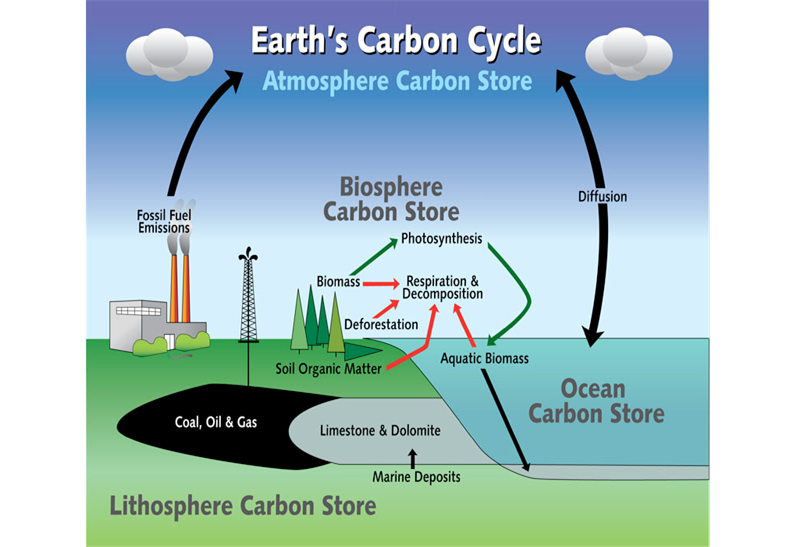 Ess topic 23 flows of energy and matter amazing world of science nitrogen cycle ccuart Images