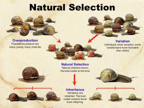 Natural Selection The Principle That
