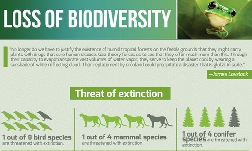 Image result for biodiversity loss and its impact on humanity